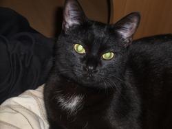 Nenette, chat Gouttière