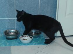 Nénette, chat
