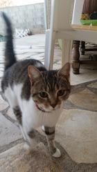 Nenette, chat