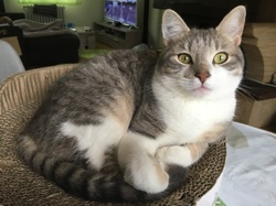 Néo, chaton