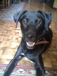 Neo, chien