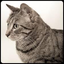 Néo, chat