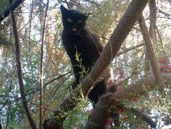 Nerina, chat Gouttière