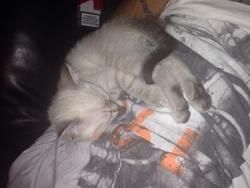 Nesquik, chat Gouttière
