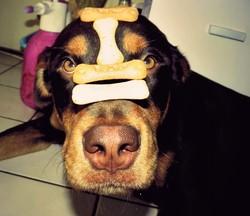 Nesta, chien Rottweiler