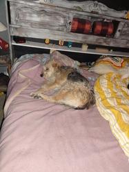 Nicky, chien