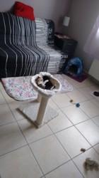 Nikie, chaton