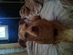Nikita, chien
