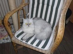 Nikita, chat Persan