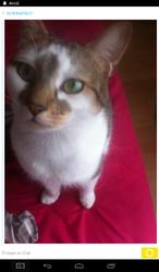 Nikita, chat Gouttière