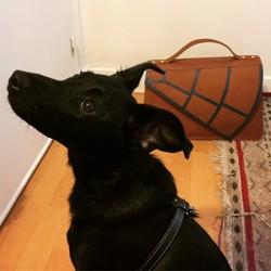 Nikka, chien