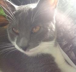 Nikki, chat Gouttière