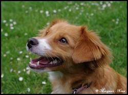 Nina , chien