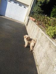 Nina, chien