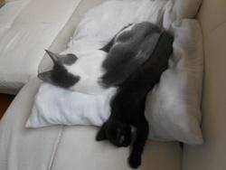 Nina Partie Beaucoup Trop Tot , chat Gouttière