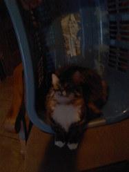 Ningwoué, chat