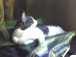 Nini, chat Gouttière