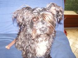 Caline,Et Nala, chien