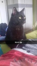 Nino, chat