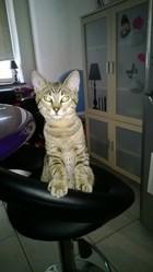 Ninou, chat Gouttière