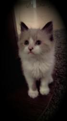 Ninou, chaton Gouttière