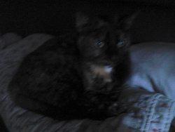 Ninouche, chat