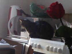 Ninouchka, chat Gouttière