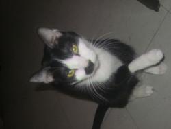 Njy, chat Gouttière