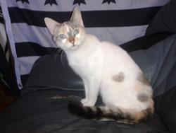 Nna, chat Européen