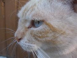 Noé, chat Gouttière