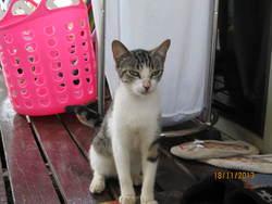 Nowelle, chat