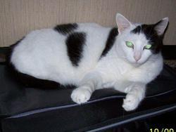 Noémie, chat