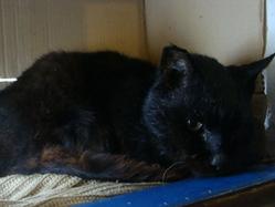 Noiraud , chat Gouttière
