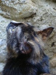 Noiraute , chat Gouttière