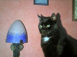 Noireau, chat