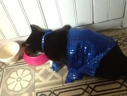 Noirette, chat Gouttière