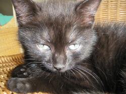Noirotte, chat Gouttière