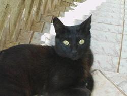 Noirou, chat