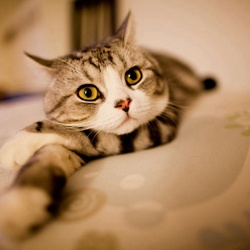 Noiroux, chat