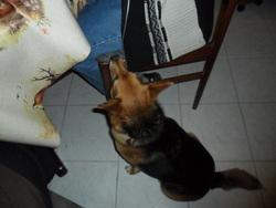 Noisette, chien