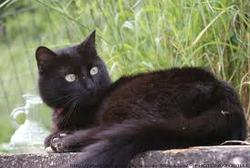 Noix-De-Pécan , chat