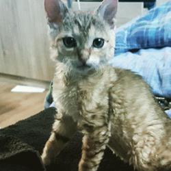 Nostromo, chaton