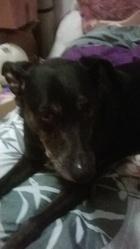 Noucheka-Neige , chien
