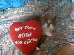 Nouchka, chat Gouttière
