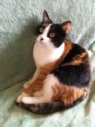 Nougatine, chat Gouttière