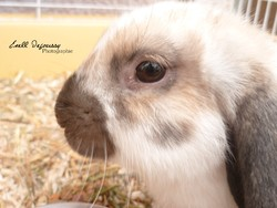 Nouggy, rongeur Lapin