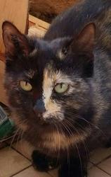 Nouméa, chat Gouttière