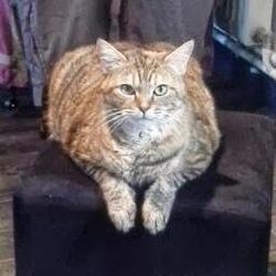 Nounette, chat Gouttière
