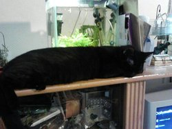 Nounousse, chat