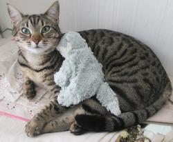 Nouschka, chat Mau Egyptien